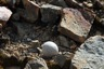 A nest between the stones, probably of an antarctic tern