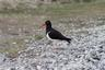 One of the Falkland Island's birds